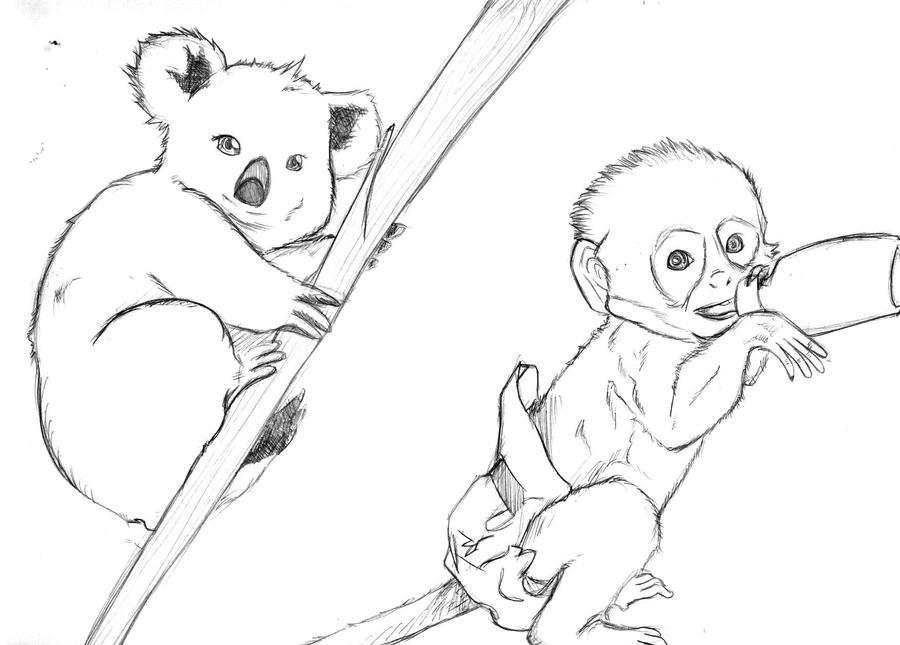 Koala And Baby Monkey Sketch by Greiso on DeviantArt
