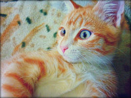 My lovely ginger kitten by UkkiRainbow