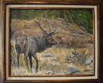 Rocky Mountain Elk Oil Painting on Canvas