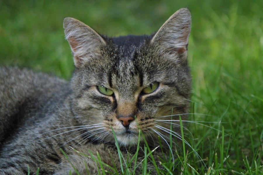 Kitty kitty...?