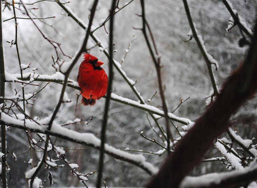 Winter Perch by lovevigilanti