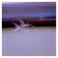 Flight Of The Bird by EintoeRn
