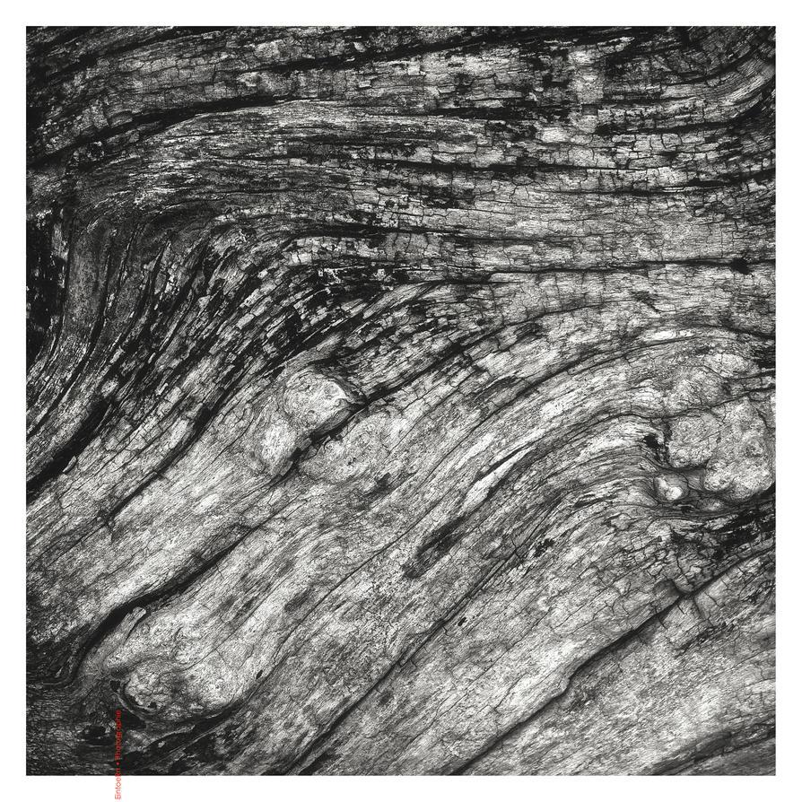 Driftwood by EintoeRn
