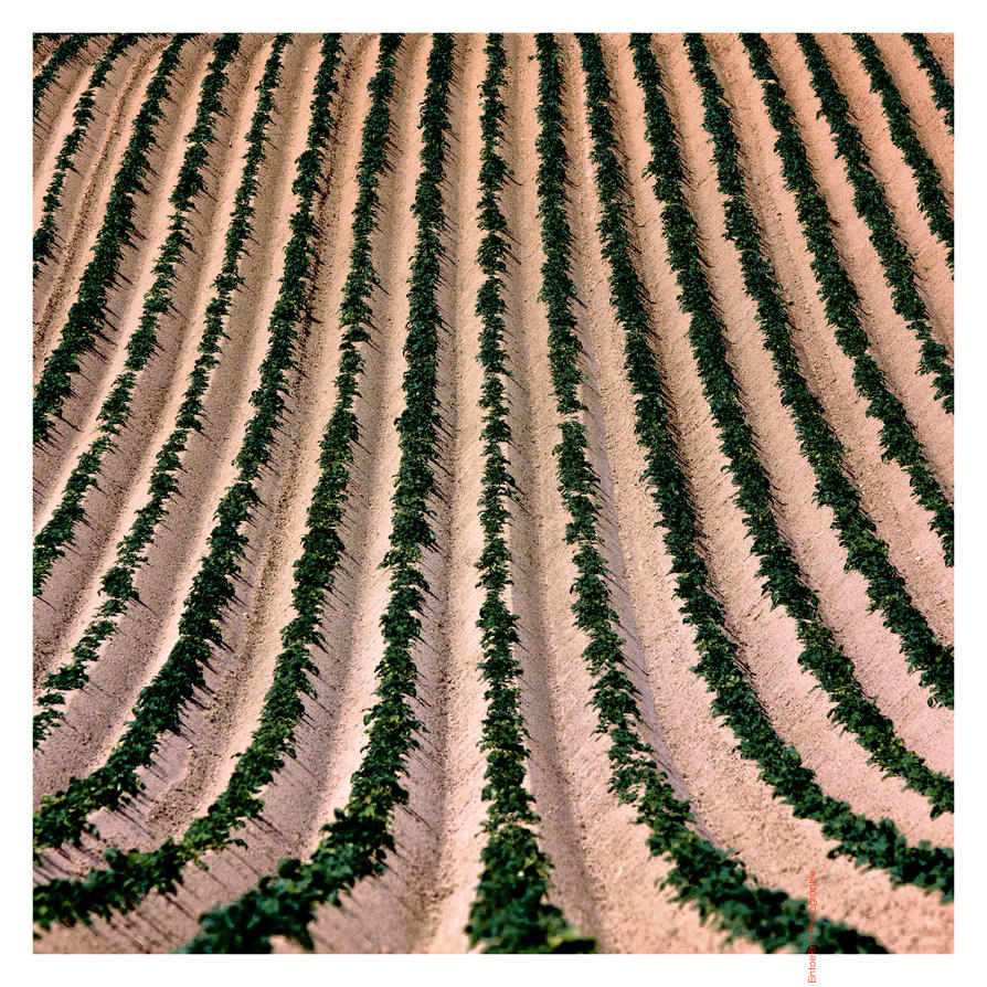 Agricultural Optimisation by EintoeRn