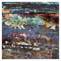 barnacle wisdom by EintoeRn