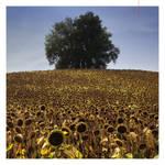 sunflower hills by EintoeRn