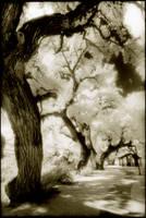 Utah Trees 1-11 by woodeye
