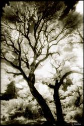 Utah Trees 1-12 by woodeye