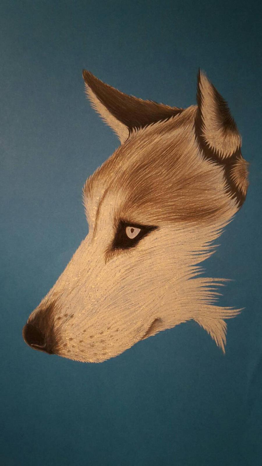 Husky  by AurorynDragon