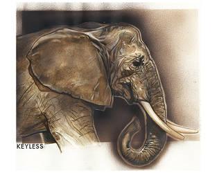 Elephant tooth by KeylessEntry