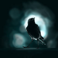 Nightingale by mydlas