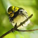 curious birdy