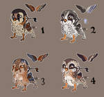 Pygmy gryphons adopt  all sold