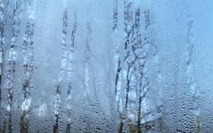 Rainy window 1