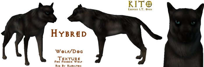 Hybred the Wolf Dog *Only did the texture*