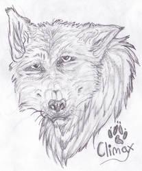 Vintage Wolf Sketch