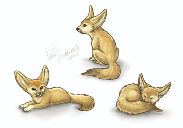Fennec fox baby drawings