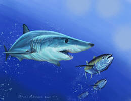 Mako Shark on the Hunt