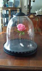 Rose and Bell Jar- Beauty and the Beast props