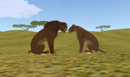 Sam and Acacia