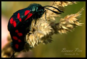Some kind of moths