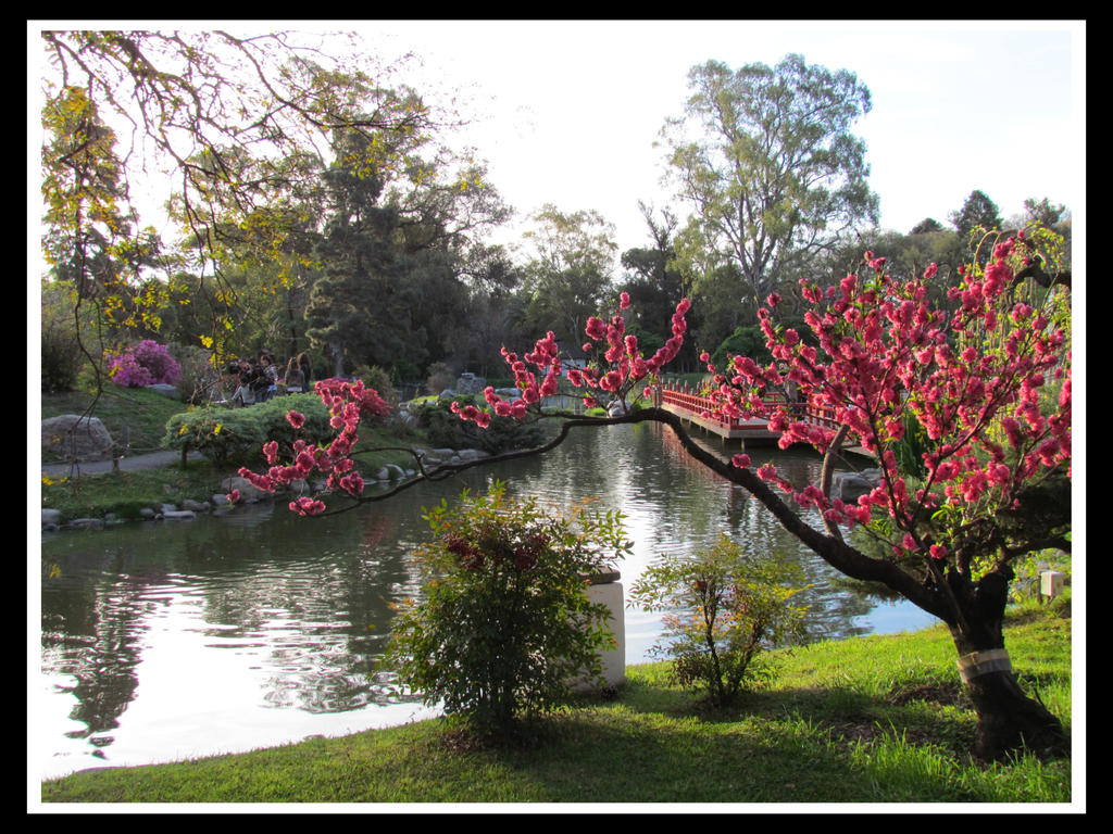 Jardin japones buenos aires by newthunder on deviantart for Jardin zoologico buenos aires