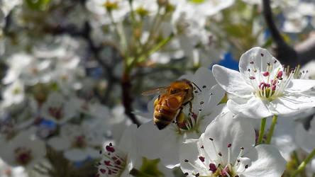 Bee Friend by JenniBeeMine