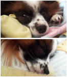 My Little Furrito by JenniBeeMine