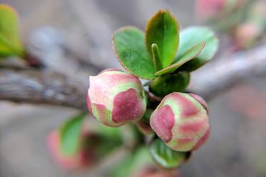 Spring Has Sprung by JenniBeeMine