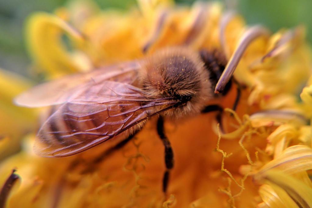 Busy Little Bee by JenniBeeMine