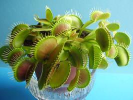 carnivorous plant 4 by MorlothStock