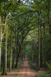 Chemin forestier by nonphotogenique