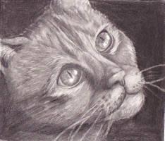 Cat by tzigone510