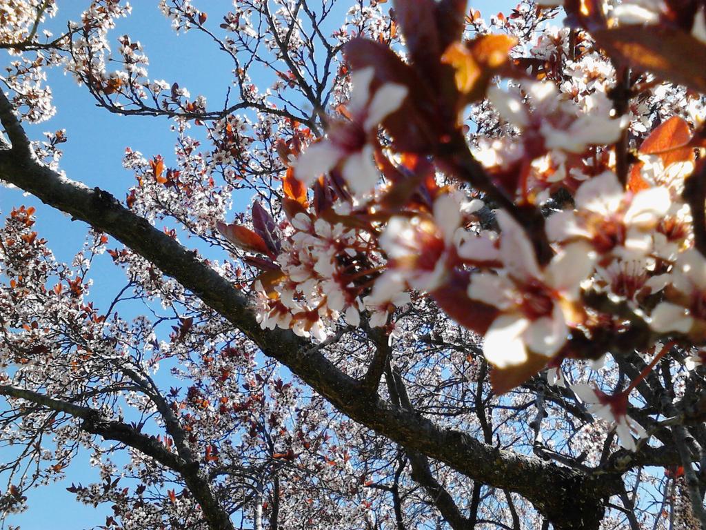 Nature Shot Tree Flowers by bohochik