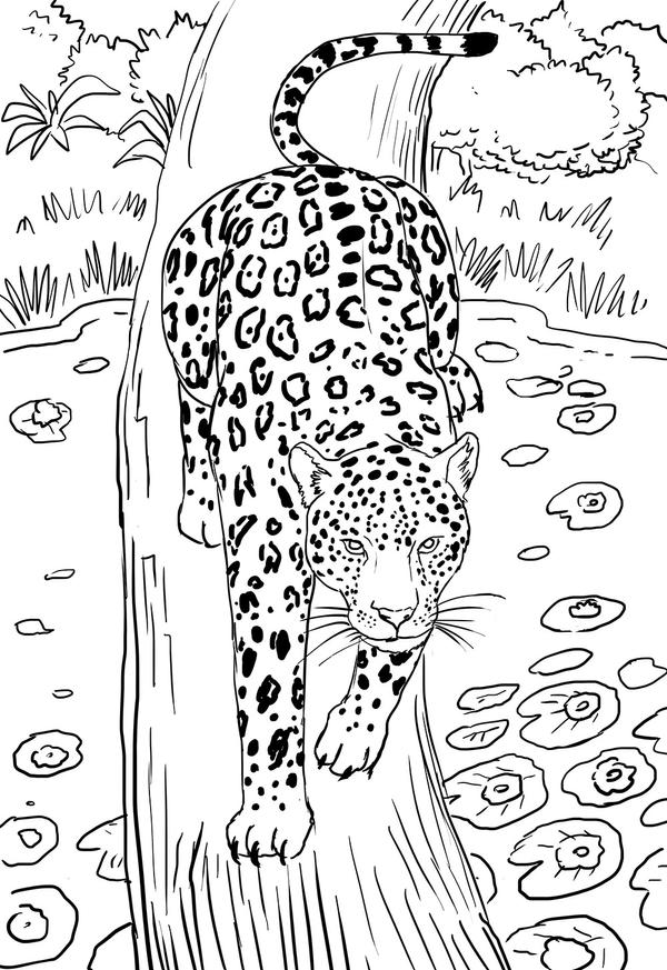 jaguar line drawing by kamazotz