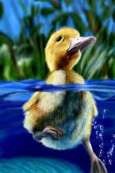 Duckling by starmist