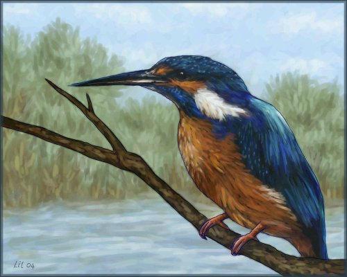 Kingfisher by starmist