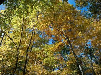 Cranberry Lakes Preserve 4 by rtpoe