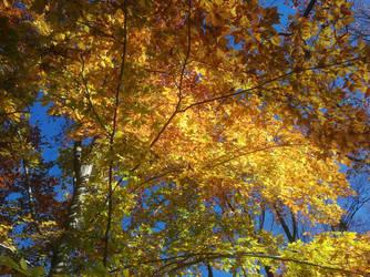 Sunlit Leaves by rtpoe