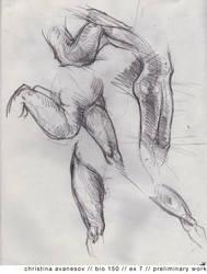 Upper limb study