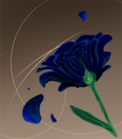 -rose- by GalaciaBarton