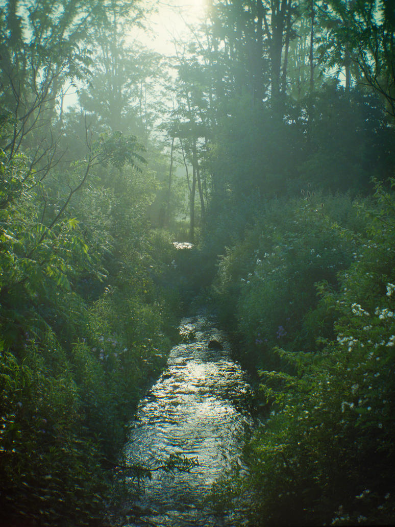 Morning Creek by eva44
