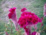 flowers by Passavante