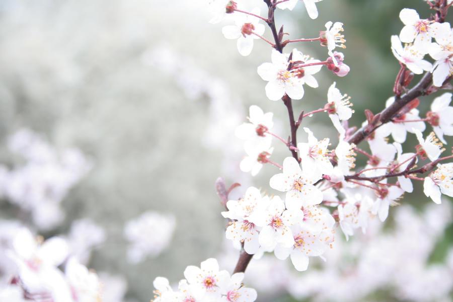 Calendar Wallpaper Quill : Spring flowers by quill of wonder on deviantart