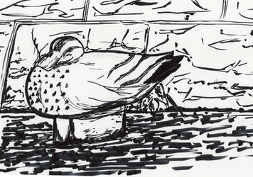 The duck of that river by inopinai