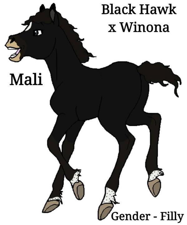 What If Foal, Black Hawk x Winona by Kristin1991