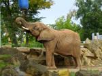 Animal Stock - Elephant II