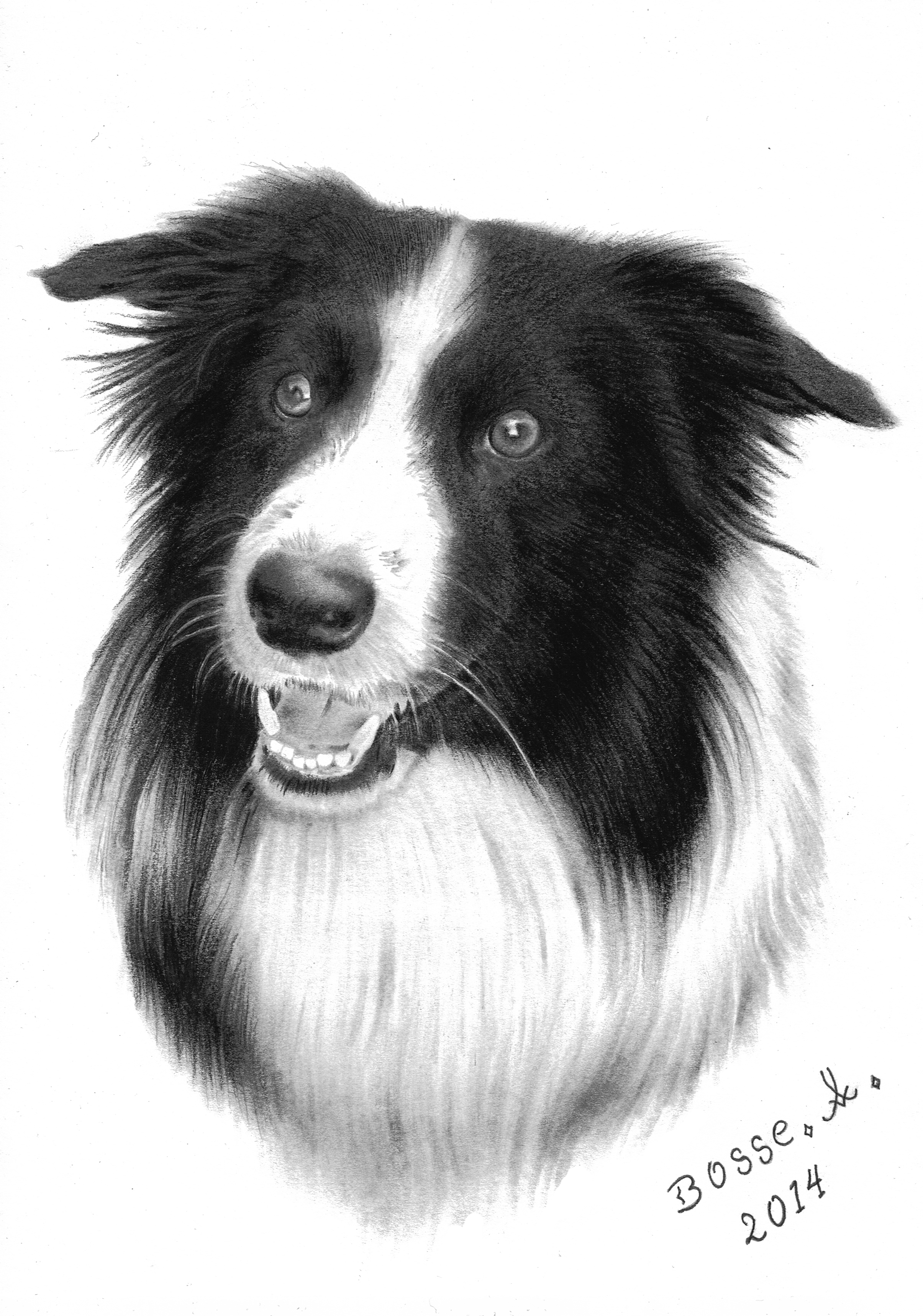 border collie by torsk1 border collie by torsk1