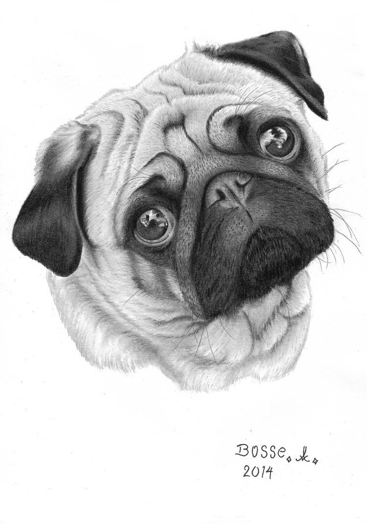 Pug by Torsk1
