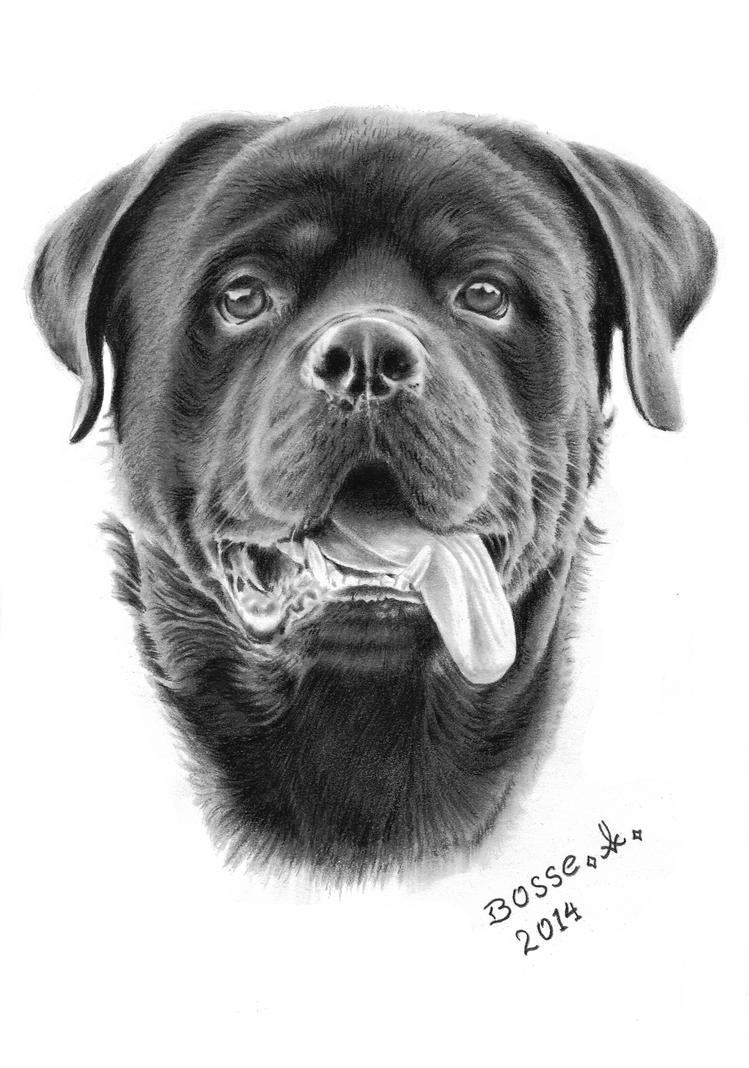 Rottweiler 2 by Torsk1